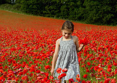 poppies (Keith.CA) Tags: sunset summer england girl field evening nikon national worcestershire geographic poopies bewdley colorphotoaward worcestershirewildlifetrust nikonflickraward nikkor1685mm blackstonefarm d3100