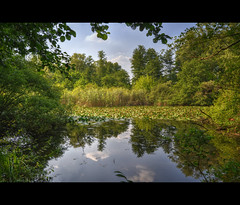 oasis WWF (hdr) (ar.t) Tags: light summer reflection nature colors cores luces nikon scenery italia estate place natura scene oasis colori hdr wwf reflejos italiy oasi detials
