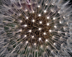 twinkle twinkle star (gos1959) Tags: jammerbugt gynther doublyniceshot tripleniceshot mygearandme mygearandmepremium biersted