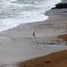 Olha o pinguim chegando do marzao