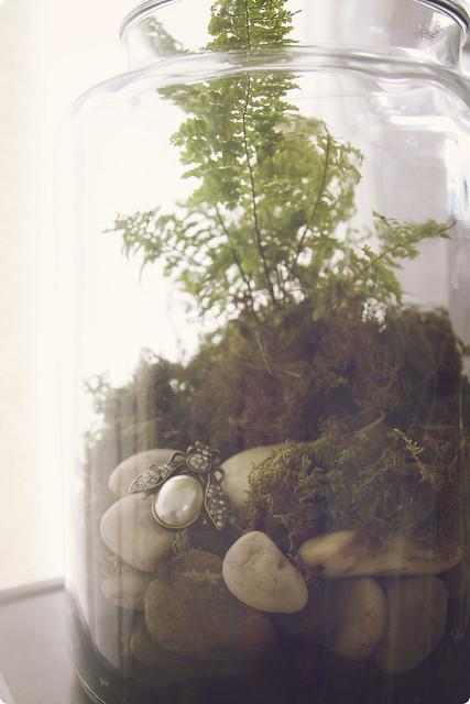 terrarium fern dazzler