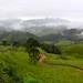 ... e lindas paisagens verdes