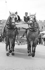 al trote, al trote, al galope, galope, galope (quino para los amigos) Tags: horses caballos krakow mateo polonia cracovia carreta img3910