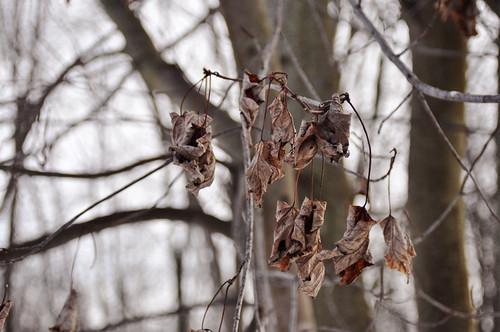 02/16/11 leaves