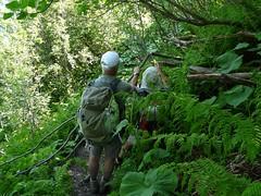 Débroussaillage sur le chemin du col de Basmont au col de l'Arc 033