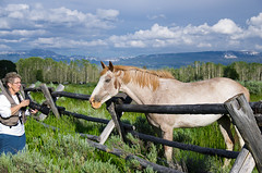 Nancy the Horse Whisperer (slingscode) Tags: usa wyoming tetons wy jacksonwyoming jeffclow dirtcheapphotography