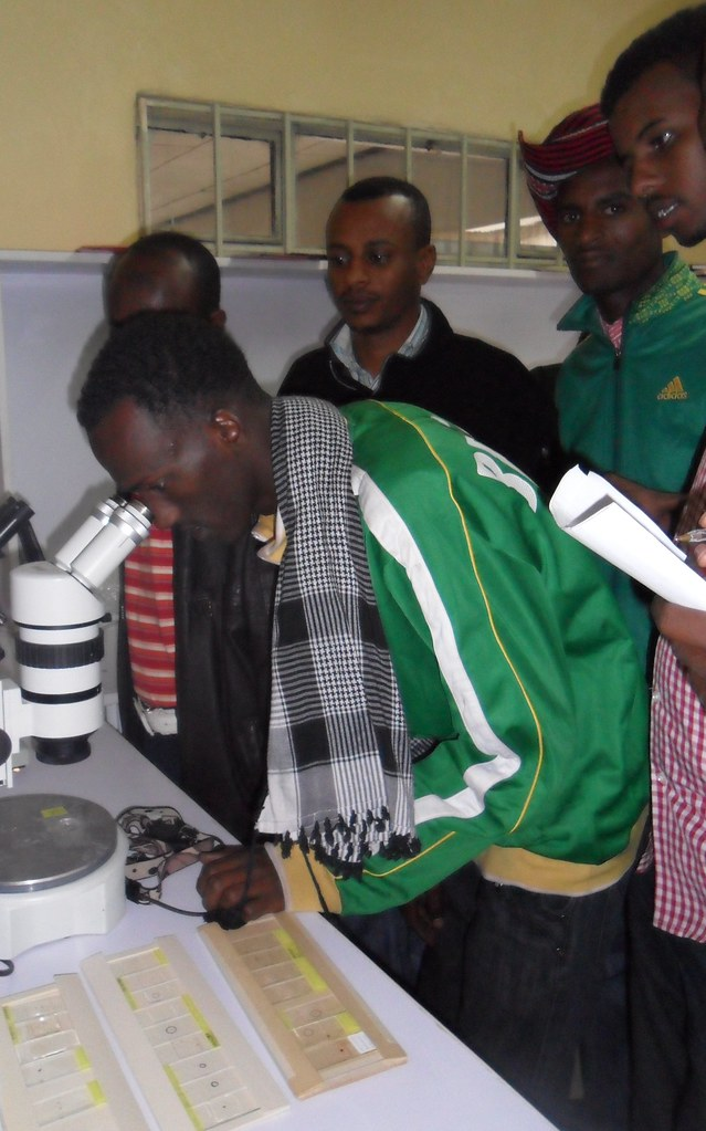 Students from Jijiga University examine poultry ectoparasites at EIAR lab, Debre Zeit, Ethiopia