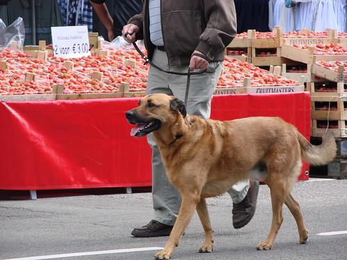 Brave Hond