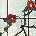 Window33-Rose