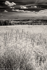 Cypress Hills in IR (Buhler's World) Tags: world park flowers trees sky bw white mountain plant black clouds ir hill infrared cypress provincial buhlers crayok
