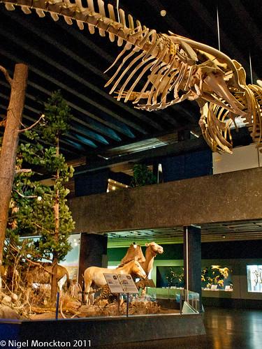 Natural History Museum, Geneva