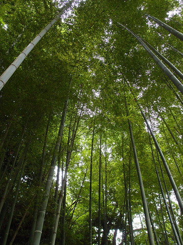 明月院 竹林