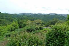 瀬上市民の森(港南台から)(Segami Community Woods)