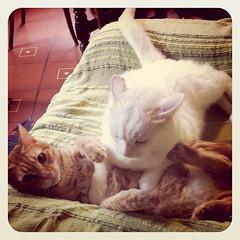 Stand by me (effexeffe) Tags: cats pets animal animals cat feline felini gatto amore gatti animali animale loveofmylife mici multiplecats catlover gattara petlover federicafabbiani