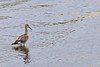 Day 207
