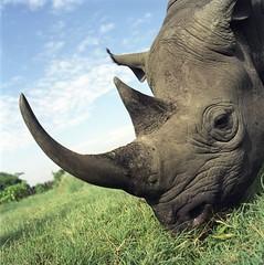 360-Part1 (6) (Mars-Flash) Tags: animal landscape background wildlife natuur safari rhinoceros rinoceronte vilt neushoorn nashorn  vidaselvagem safri wildtiere  rhinocros sarvikuono vidasalvaje   nosoroec  noshrning  orrszarv  faunaselvatica szafari nosoroec    zv vadvilg  villielimet espcessauvages dzikaprzyroda   naturalandtexture
