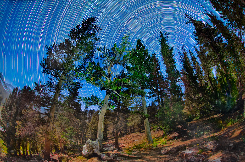 The Forest and the Stars © Harold Davis
