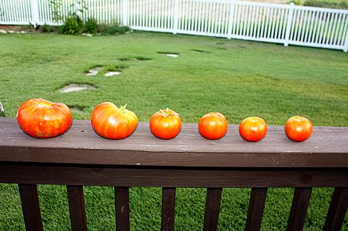 tomato-tuesday