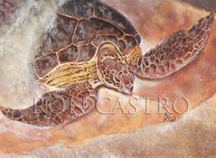 Casey's Turtle
