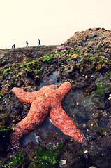 Starfish! (eblack) Tags: