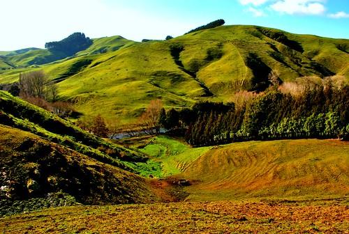 NZ_farm_2