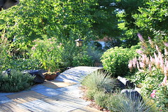 Foliage 43 (thegardenbuzz) Tags: bridge shadows path grasses milkweed sedum pavers astilbe festuca