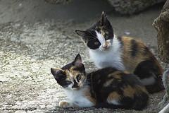 Gatitos (sairacaz) Tags: cats canon kittens gatos galicia 70300mm tamron cangas eos550d