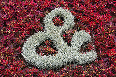 waddesdon manor flowers ampersand