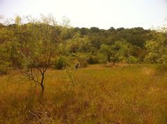 Big Cedar Scenery