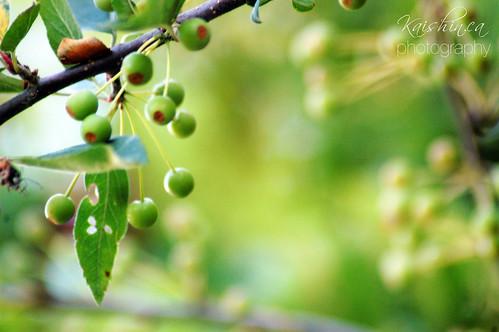 pretty | VanDusen Botanical Garden by kaishin | dash of food