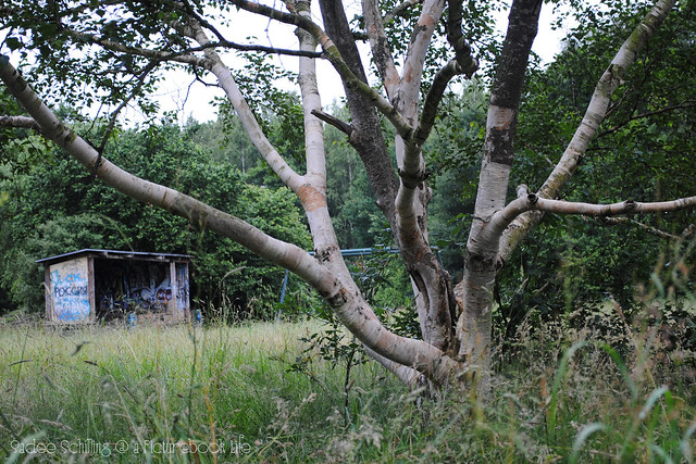 tree w shack