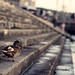 Budapest Positive #3 - Harbor Duck