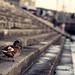 Budapest Positive #3 - Harbor Duck