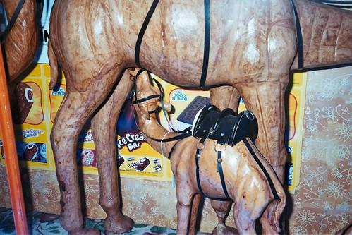camel porn