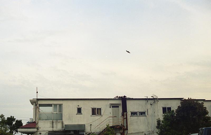 鎌倉辺り2009