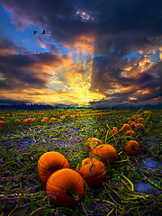 Serenade (Phil~Koch) Tags: morning flowers blue autumn sunset red sun green fall love floral field birds vertical wisconsin clouds sunrise photography landscapes spring twilight peace earth farm pumpkins natur scenic meadow inspired naturallight farmland serene agriculture inspirational horizons environement photocontesttnc11 philkoch myhorizonart