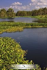 Somewhere in Palmdale Florida (Chrissy Avila Photography (cHrIsSy1554)) Tags: landscape photography florida floridawildlife ©csquaredphotography chrissy1554 ©christinaavilaphotography ©chrissyavilaphotography wwwchrissyavilaphotographycom