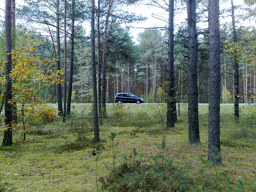 Forest road & Opel Zafira