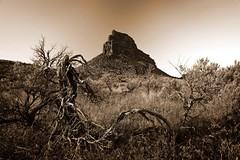 Umatilla Rock (Andres Caldera) Tags: sepia washington dryfalls monumentcoulee umatillarock nikkor1635mm