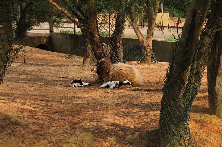 六福村動物園056