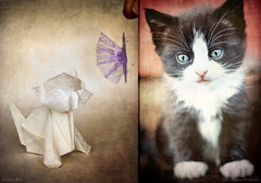 Happy National Cat Day! What Do Kittens Dream Of :-) (Katrin Ray) Tags: white toronto ontario canada kitten diptych origami adorable kittens textures digiart ebook collaboration irresistible   collaborativework