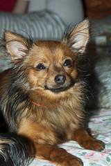 Yuri (miky199 ) Tags: dog dogs animal animals cane digital canon eos venezia animali animale giulia friuli cani 50d russkiytoy