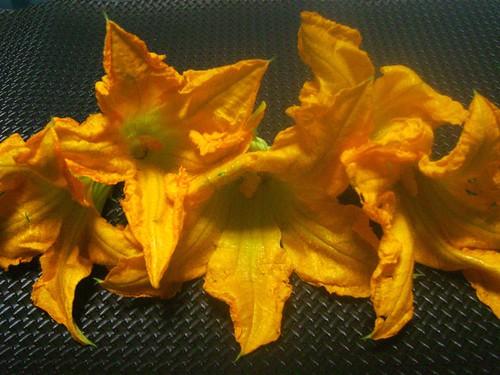 Flor de Calabaza 1