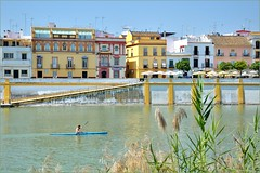Sevilla : Kayaking on the Guadalquivir - 1/2 -  EXPLORE (Pantchoa) Tags: bar cafe sevilla andaluca guadalquivir nikon kayak faades colorfull facades explore kayaking canoeist sville andalousie triana rawfile fachadas coloridas cano d90 piragista latertulia colores  nikonpassion fileraw nikonflickraward capturenx2  panoramafotogrfico canoiste ringexcellence viewnx2 piraguiste