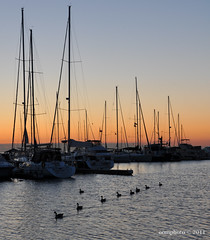 A row of Canada Geese...  just before sunrise at Credit Village Marina (oomphoto) Tags: marina sunrise boats canadiangeese mississauga portcreditharbour creditvillagemarina portcreditmarina hpccanada
