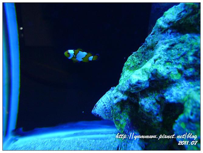 110711小丑魚主題館 (32)