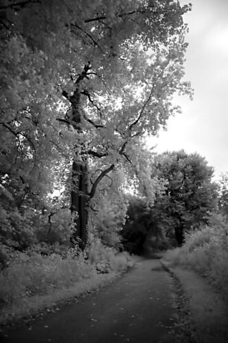 Day 195 - Jordan Creek Trail by Tim Bungert