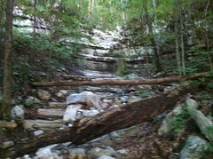 Nichols Hollow Falls