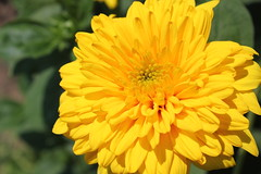Yellow Flower_2