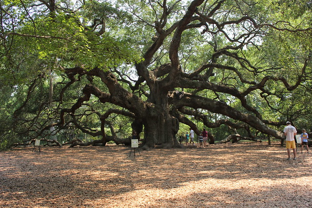 angel oak is magical
